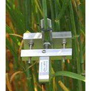 渠道科技 DD-S茎干直径生长变化记录仪