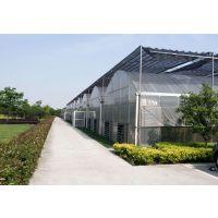 连栋薄膜温室大棚 现代蔬菜连体大棚 农业种植园观光园大棚