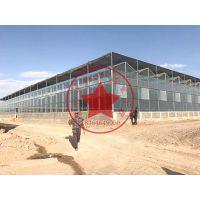出口钢结构智能连栋玻璃温室大棚—青州瀚洋温室