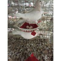 郑州大型白羽王肉鸽养殖场:鸽子批发 种鸽批发 加盟合作 包销路