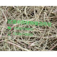 紫苑苗价格/紫苑苗批发价格/紫苑苗多少钱一斤