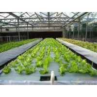 山西蔬菜育苗大型温室20000平米型、采光好通风性能佳