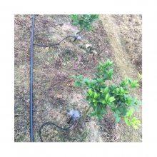 丘陵柑橘灌淋安装工程每亩造价