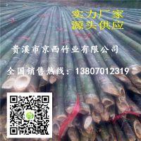 供应小山竹 园林苗圃 绿化工程 造地工程用的小竹竿批发