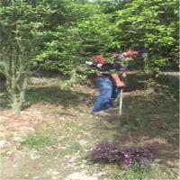 四冲程汽油锄地机 果园背负式松土锄草机 进口割草机