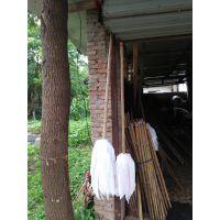 金竹牌拖把,结实的竹柄,超吸水布料,精细的做工,良好的性能。首单优惠20%