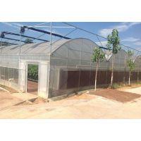 湖北鄂州蔬菜育苗塑料大棚育苗温室3米圆拱型建造报价
