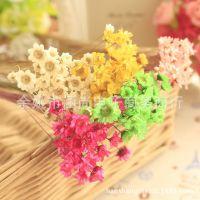 迷你 巴西星菊 拍摄道具干花 小雏菊小星花 果冻口红玻璃球用花