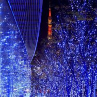 LED彩灯、工艺装饰灯具,圣诞灯串满天星灯串节日灯饰批发-禾雅照明
