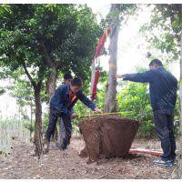 厂家质保的挖树机 大叶黄杨移栽起树机 成活率高的起树机