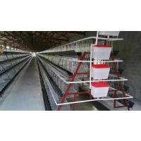 A型阶梯式自动化养殖鸡笼 三层四层蛋鸡笼子蛋鸡养殖设备 全自动