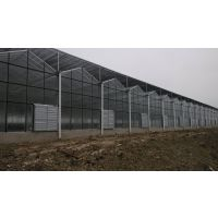 建造济南新农业园区,智能连栋温室,蔬菜温室大棚