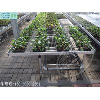 移动苗床 让苗木生产更加高效便捷