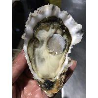 乳山生蚝海蛎子厂家微商一件代发