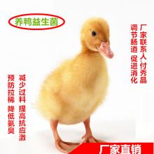 养鸭专用微生物复合益生菌制剂