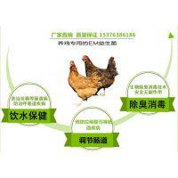 鸡用益生菌菌剂生产厂家