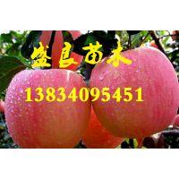 山西供应3公分到10占地苹果树苗