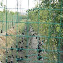 供应草绿色涂塑焊接网 铁丝荷兰网 土鸡养殖铁丝围栏网