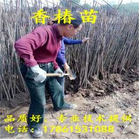 http://himg.china.cn/1/4_310_235670_800_800.jpg
