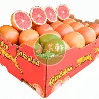 奶茶餐饮店榨果汁泡冷饮专用进口鲜果批发货源南非金豹葡萄柚西柚
