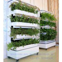 种植机净化器无土栽培设备家居摆设现代智能种植设备监测环境