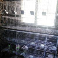 三层12位商品兔笼 子母兔子笼 兔笼子 养殖兔笼