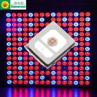 2835黄光灯珠 2835 0.2W 590-594高光效 正品封装 贴片LED灯珠 添光彩生产