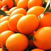 正宗赣南脐橙,不催熟,重量1个越250g不打蜡,纯绿色健康水果,一箱10斤68元,1箱20斤128元