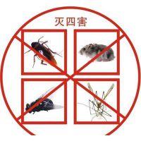 烟台莱山区芝罘区灭臭虫灭跳蚤灭蚂蚁专业杀虫公司