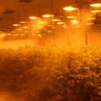 顶置光型植物生长室
