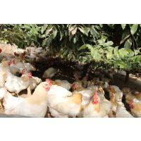 天农优品-清远鸡蛋紫菜汤的做法|婴儿鸡蛋羹的做法