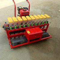 拖拉机牵引式油菜播种机 农用蒲公英精量播种机 多功能小麦精播机厂家