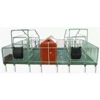腾诚专业生产供应双体母猪产床 复合板母猪产床