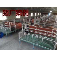 生产仔猪保育床 保育床厂家 猪设备厂家