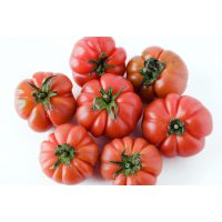 番茄椒种苗预订