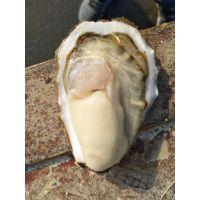 乳山牡蛎蒸多久 生蚝怎么清洗 海蛎子价格