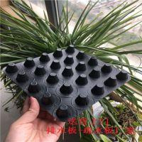 凸片搭接20蓄排水板——HDPE排水板+白黑两色土工布