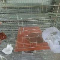 加粗12位肉鸽养殖笼 鸽子笼厂家找河北利港丝网