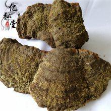 中药松针层孔菌功效@松针层孔菌多少钱一斤