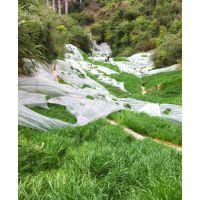 供应重庆国道护坡固土草种灌木种子绿化品种