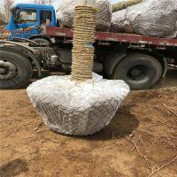 许昌树根移植网供应,包树铁丝网篮,包土球网勾花树根网
