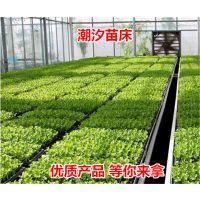淮北A型架式草莓立体种植槽新品上市 特价出售