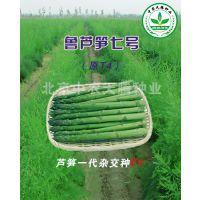 供应 鲁芦笋七号f1-高产芦笋种子,新品种芦笋种子