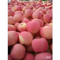 80以上优质纸袋条红红富士苹果开库销售