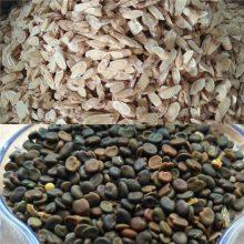 中药黄芪种子一亩地种植多少公斤