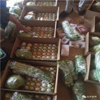 北京农家散养柴鹅蛋