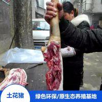 宁乡土花猪肉 野生猪肉绿色健康 生态养殖原生品质 食用农家猪野猪肉