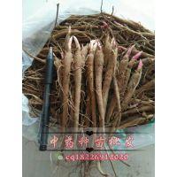 赤芍种子赤芍苗赤芍芽头赤芍栽培技术芍药种子芍药苗