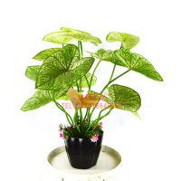 东莞浩晟仿真植物盆栽 真树干/玻璃树干 过胶手感叶 款式逼真