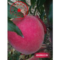泰安开发区瑞康苗木供应单果均重600克的超级珍品王桃